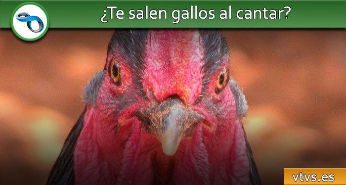 gallos al cantar