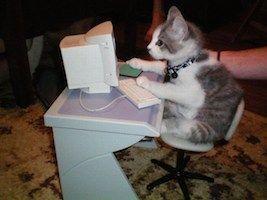 gato ordenador